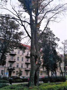 Wyrok dla drzewa Adam iEwa?